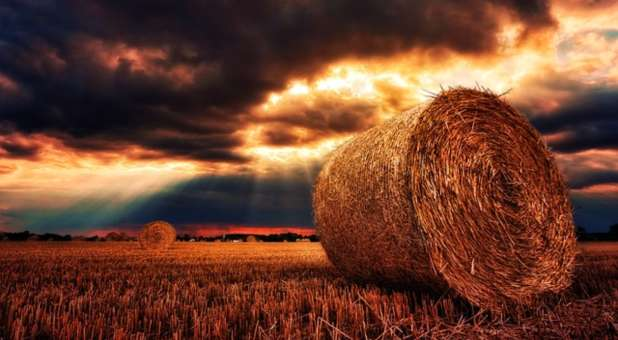 full-harvest